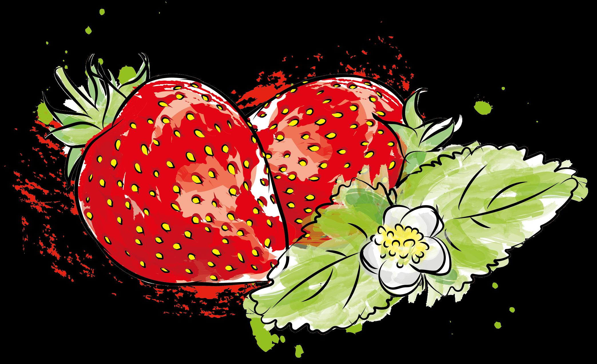 Illustration Erdbeeren